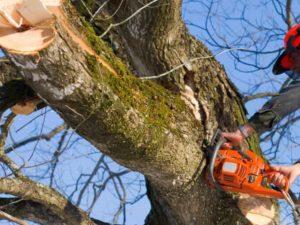 DeLand Tree Cutting