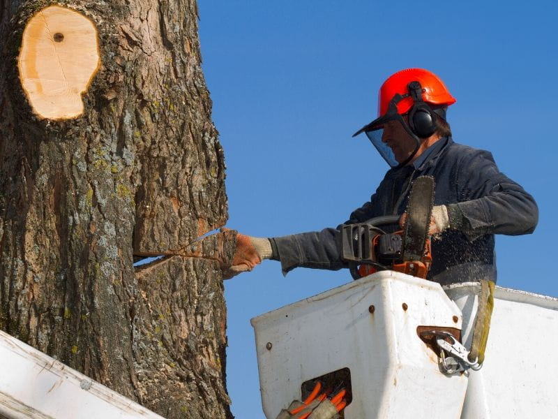 DeLand Tree Removal