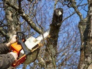 DeLand Tree Trimming