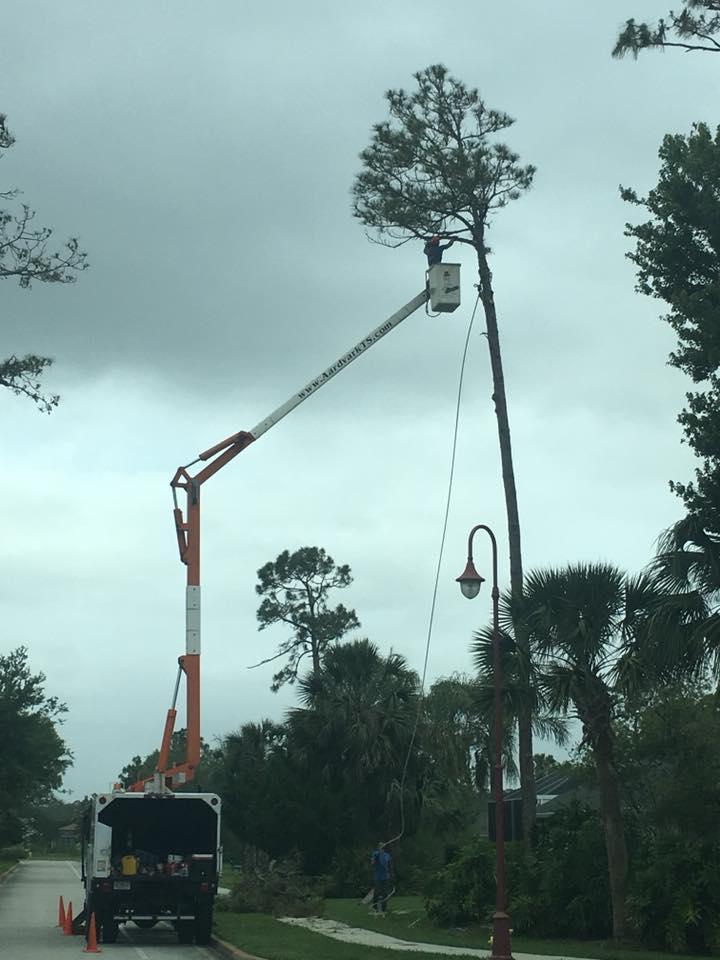 DeLand FL Tree Service