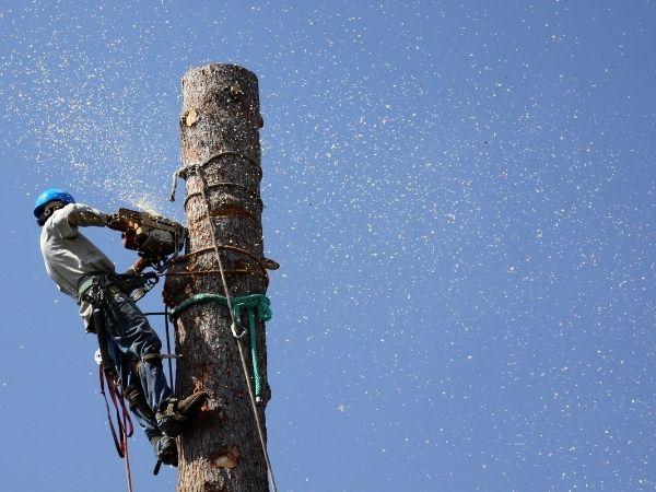 tree removal deland