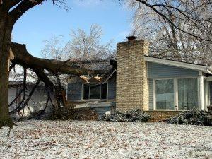 dangers of diy tree removal