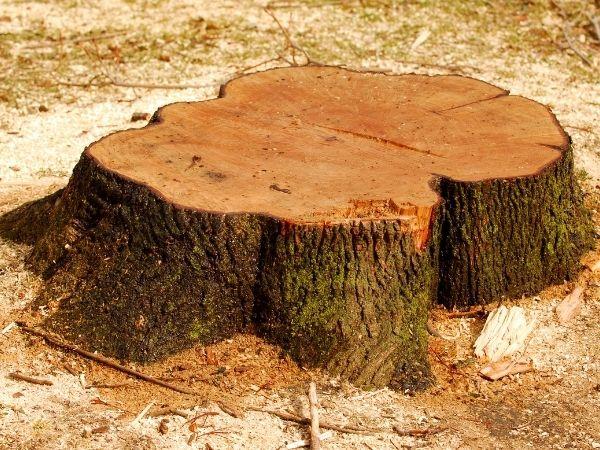 deland stump removal