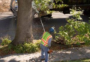 tree service contractor deland
