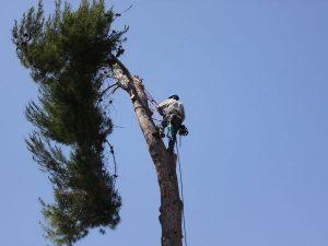 local tree removal deland