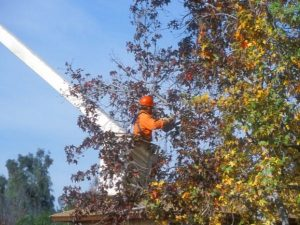 Benefits of Tree Trimming DeLand